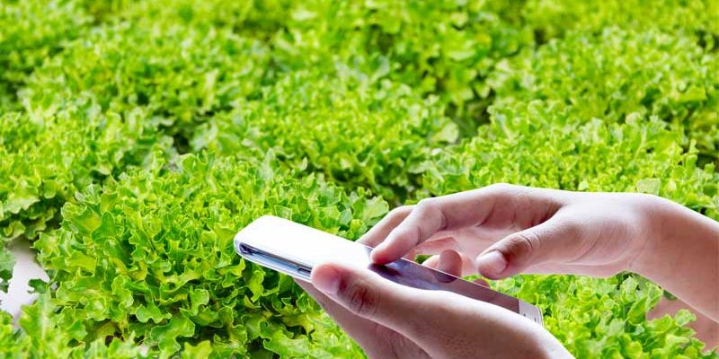 Phone-apps-for-hydroponics