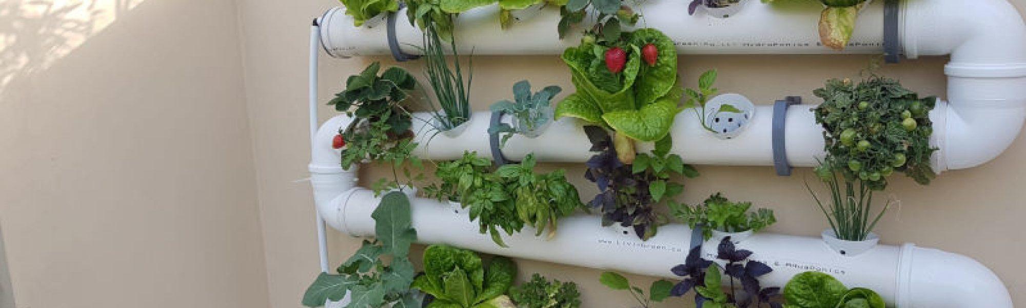 חקלאות ורטיקלית לבית